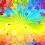 Rainbow Maple Leaves Royalty Free Stock Photo