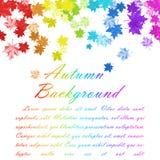 Rainbow Maple Leaves Stock Images