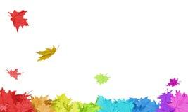 Rainbow Maple Leaves Stock Photos