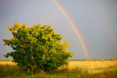 Rainbow Meadow Royalty Free Stock Photography