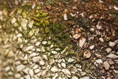Rainbow Moss Stock Photo