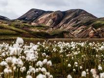 Rainbow mountains. In Iceland near Landmanalaugar Royalty Free Stock Photos