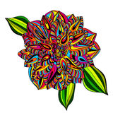 Rainbow Multicolored Dahlia Flower Royalty Free Stock Image