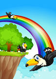 A rainbow near the cliff with flying birds Stock Image