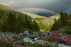 Rainbow nella foresta Fotografia Stock