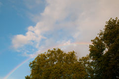 Rainbow and oak tree Royalty Free Stock Photos