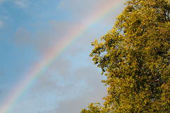 Rainbow and oak tree Stock Photo