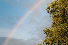 Rainbow and oak tree Royalty Free Stock Photo