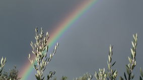 Rainbow and olive branch
