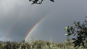 Rainbow and olive trees stock video footage