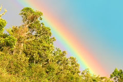 Rainbow over african rainforest. Natural background from wilderness Stock Images