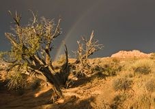 Rainbow Over Arches National Park Stock Images
