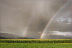 Rainbow over a corn field Royalty Free Stock Photo