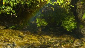 Rainbow over the creek near the forest waterfall Stock Photography