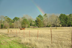 Rainbow over Farm Pasture Stock Photo