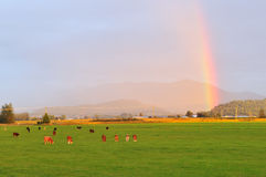 Rainbow over farmland with cattle Stock Photo