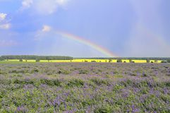Rainbow over the field Stock Images