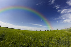 Rainbow over a field Stock Images