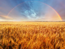 Rainbow over field Royalty Free Stock Images