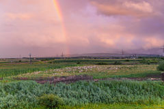 Rainbow over the field Royalty Free Stock Photography