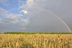 The Rainbow over a field during summer. Rainbow over a field during summer Stock Photo