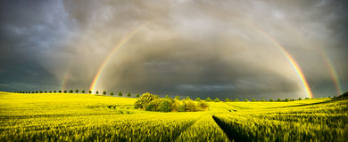 Rainbow over a field of young corn. Germany, in the background the national road 113 Royalty Free Stock Photo