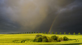 Rainbow over a field of young corn Stock Image