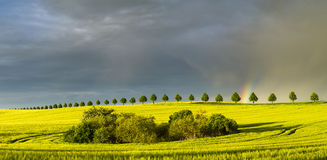 Rainbow over a field of young corn Stock Photo