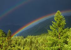 Rainbow over forest stock images