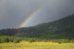 Rainbow over forest Royalty Free Stock Image