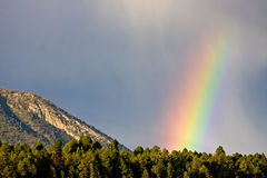Rainbow over forest Royalty Free Stock Photography