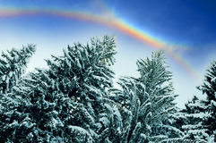 Rainbow over forest stock image