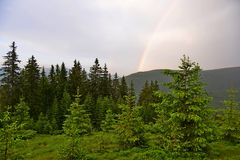 Rainbow over the forest of Carpathian mountains, Ukraine. Rainbow over the pine forest of Carpathian mountains, Ukraine. Summer time Royalty Free Stock Photo