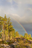 Rainbow over the forest Royalty Free Stock Photo