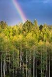 Rainbow Over Golden Aspens Stock Photography