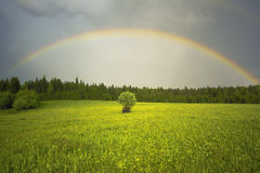Rainbow over green field Royalty Free Stock Images