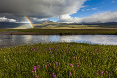 Rainbow over the green flowering meadow Royalty Free Stock Images