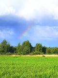 Rainbow over green grass. Sun and blue ski. Sunshine after rain. Endless Russian fields with green grass bent with the wind. Birch forest is on the background Royalty Free Stock Images