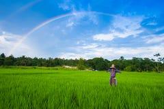 Rainbow over green paddy field blue sky Royalty Free Stock Photo