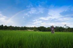 Rainbow over green paddy field blue sky Stock Photography