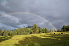 Rainbow over Karwendel mountains and sheep pasture Royalty Free Stock Photography
