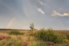 Rainbow over marsh in summer Royalty Free Stock Photos