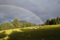 Rainbow over mountains and alpine pasture Stock Images