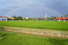 Rainbow over a paddy field Stock Photography