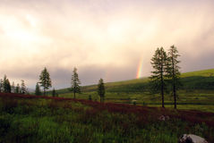 Rainbow over pines Royalty Free Stock Photography