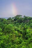 Rainbow over the rain forest Royalty Free Stock Image