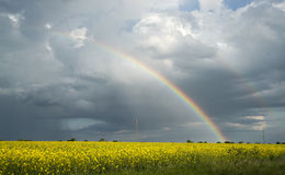 Rainbow over the rapeseed field. After storm Stock Images