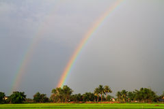 Rainbow over the rice field in evening Royalty Free Stock Image