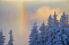 Rainbow over the snowy forest Stock Image