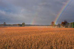 Rainbow Over Soybean Field Stock Images
